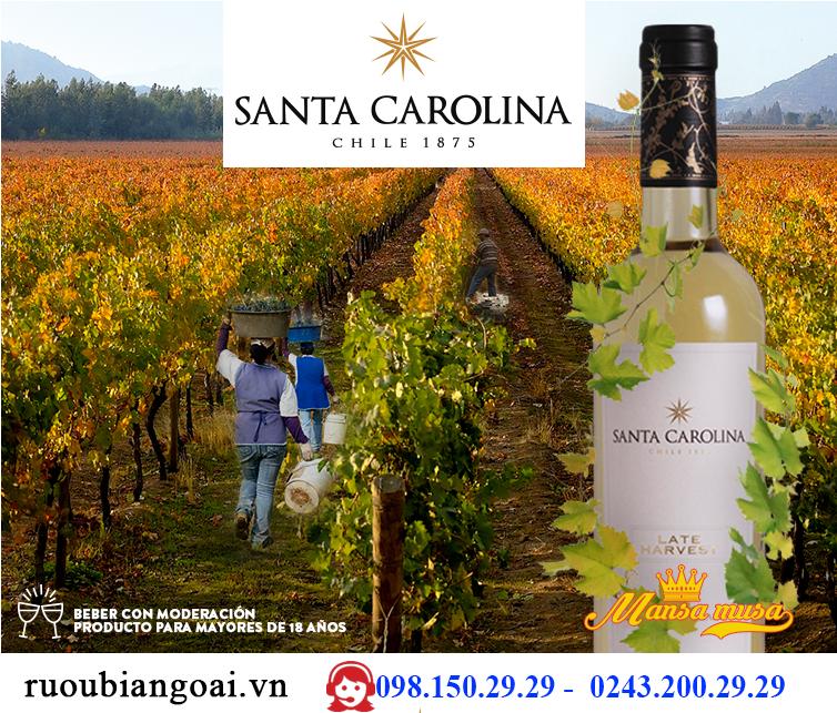 Vang Late Harvest Sauvignon Blanc 2016