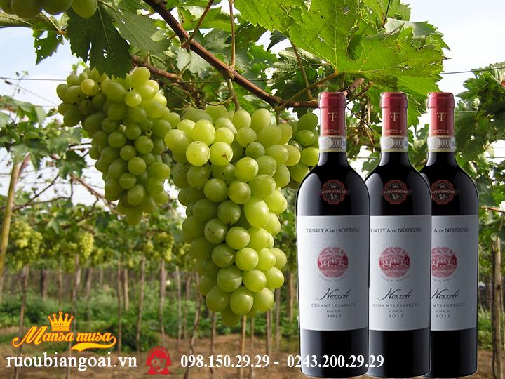 Rượu vang Nozzole 2016 - Rượu vang Ý
